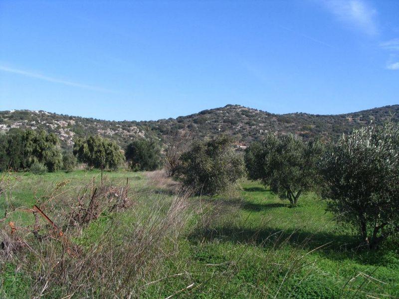 מגה וברק מגרשים למכירה ביוון, קרקע להשקעה ביוון - נדלן ביוון EO-99